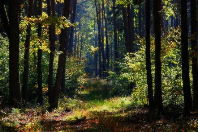 Страга леса
