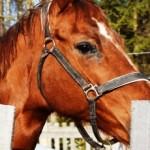 Лошади, просто лошади…